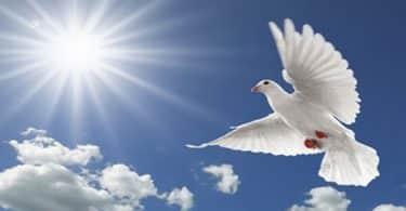 موضوع تعبير عن السلام العادل واهميته بالعناصر