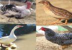 موضوع تعبير عن اهمية الطيور فى حياتنا