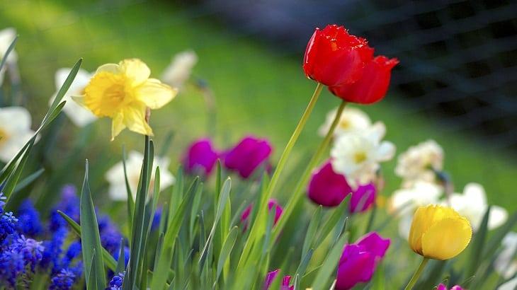 تعبير عن جمال الطبيعة في فصل الربيع