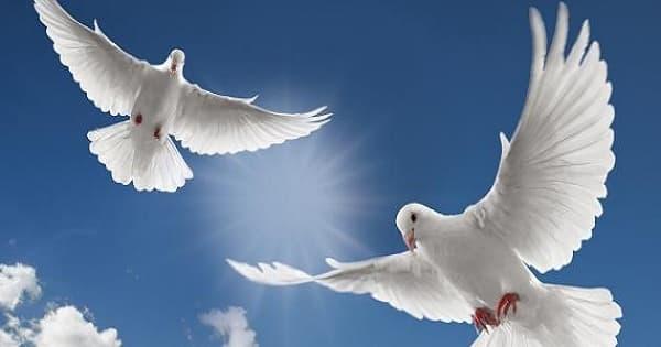 مقال عن الحرية في الإسلام