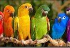 بحث شامل عن الطيور وأنواعها