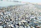 بحث عن تلوث المياه وكيفية علاجها