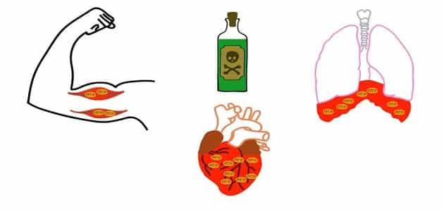 بحث عن وسائل الوقايه من أخطار السموم القاتلة