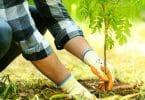 بحث عن الزراعة العضوية واهميتها للإنسان