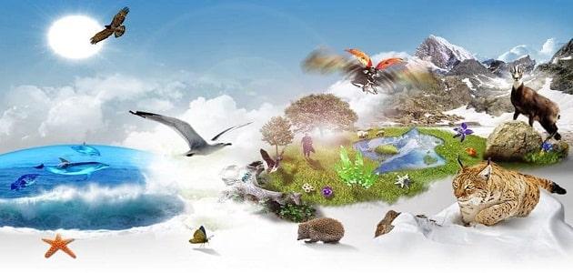 بحث عن التنوع الحيوي والمحافظة عليه كامل