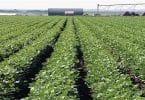 بحث عن الزراعة فى مصر جاهز للطباعة