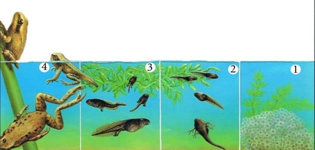 دورة حياة الحيوانات بالصور
