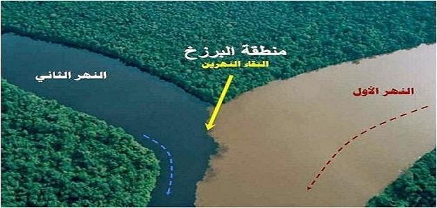 بحث عن النظام البيئي وما هي عوامل الخطر عليه