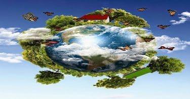 بحث عن انتقال الطاقة والمادة في النظام البيئي