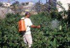 بحث عن الزراعة العضوية واهميتها كامل pdf
