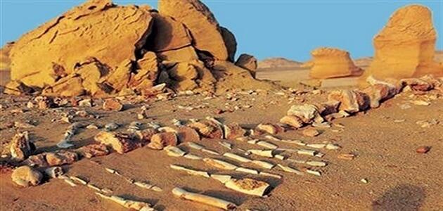 بحث عن المحميات الطبيعية في مصر