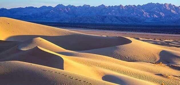 النظام البيئي الصحراوي
