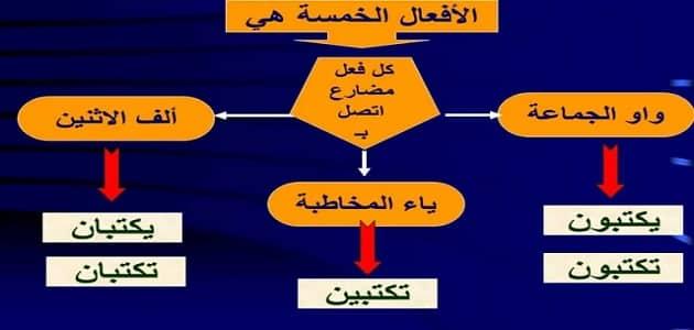 شرح الافعال الخمسة بالتفصيل